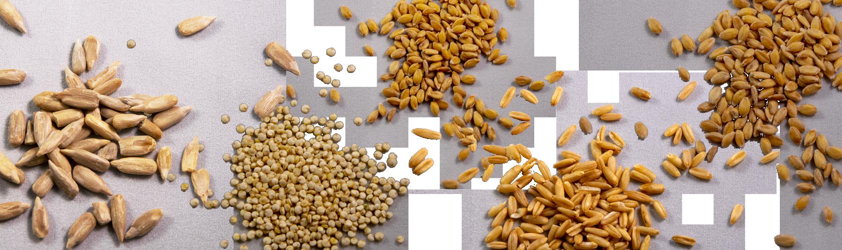 foto composizione di semi per promozione festa